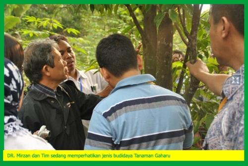 Workshop Tanaman Gaharu